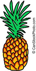 pineapple - exotic pineapple isolated on white drawn in...