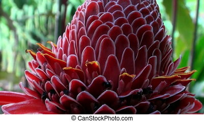 Exotic red flower and plants in French Polynesia on Tahiti Island.