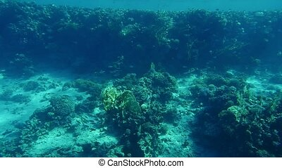 Exotic reefs with wavy weeds and sandy surface in the Red...