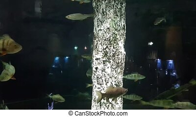 Exotic saltwater fish swimming in a big aquarium. Tropical...