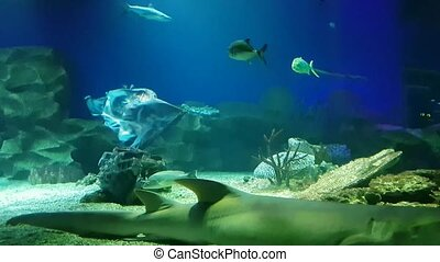 Exotic saltwater sharks swimming in big aquarium - Exotic...