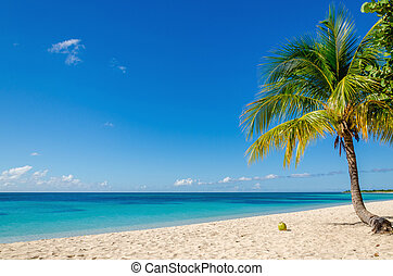 Exotic sandy beach with palm and coconut against blue sky ...