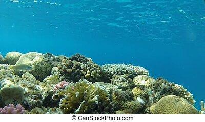 underwater coral caves