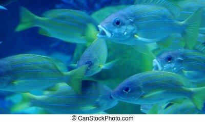 Exotic see fish in an aquarium. Underwater Scene.