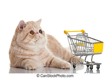 Exotic shorthair cat. cat with shopping cart isolated on white