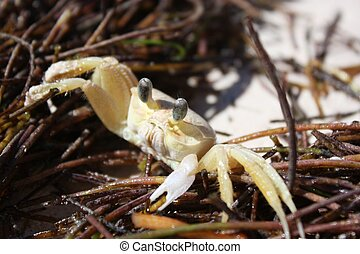 Exotic small crab on the beach