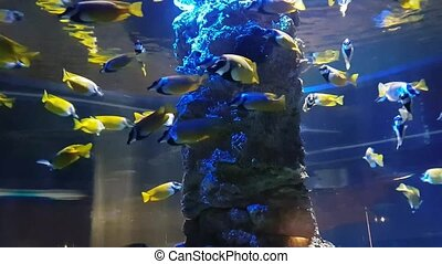 Exotic Threadfin butterflyfish in aquarium - Exotic...