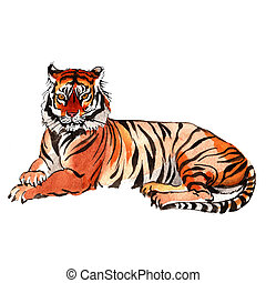 Exotic tiger wild animal in a watercolor style isolated....