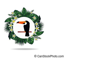 exotic toucan and flemish in circular frame , hd video animation