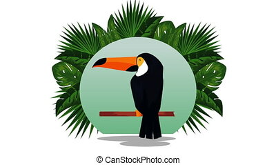 exotic toucan and flemish with pineapple in circular frame , hd video animation