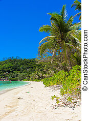 Exotic tropical beach with turquoise water