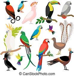 Exotic tropical birds set