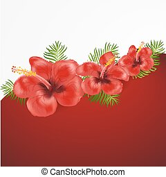Exotic tropical hibiscus flowers.