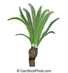 Exotic tropical high detailed palm tree isolated.