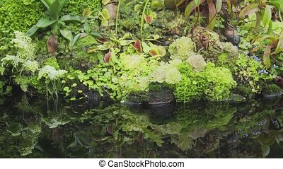 Exotic Tropical Plants at Edge of Water in Garden Park -...