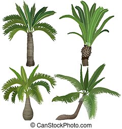 Exotic tropical realistic palm palms tree collection set.
