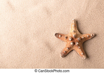 exotic tropical sea starfish on beach sand