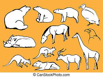 exoticas, animais