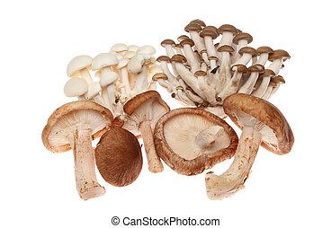 exoticas, cogumelos