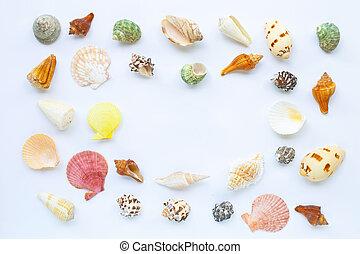 exoticas, conchas, experiência., mar, branca, composição