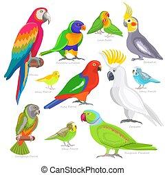 exoticas, jogo, macaw, passarinho, coloridos, parrotry, trópicos, papagaio, ou, personagem, isolado, ilustração, caricatura, tropicais, vetorial, fundo, pássaro branco