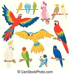 exoticas, jogo, macaw, passarinho, coloridos, parrotry, trópicos, papagaio, ou, personagem, isolado, ilustração, caricatura, tropicais, vetorial, fundo, trópico, pássaro branco