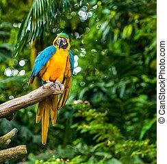 exoticas, papagaios, sentar, uma filial, fauna