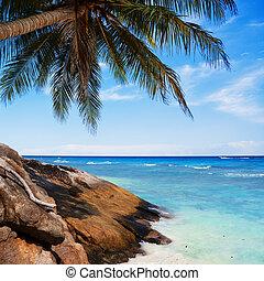 exoticas, praia tropical