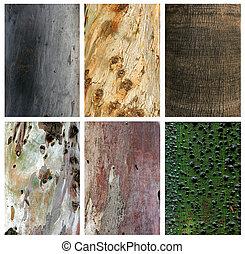 exoticas, texturas, troncos, colagem, foto, madeira