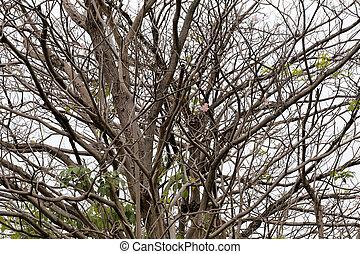 exotique, à feuilles caduques, woodland., branches, arbres