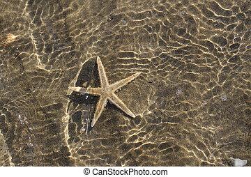 exotique, étoile, spectaculaire, eau, chaud, mer, sous