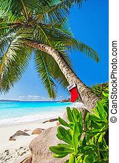 exotique, arbre, chaussette, exotique, plage paume, noël