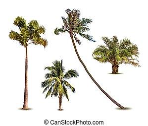 exotique, arbres., différent, vecteur, paume
