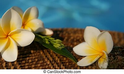 exotique, bleu, frangipanier, sur, eau tropicale, plumeria, frais, fleurs blanches, piscine, natation