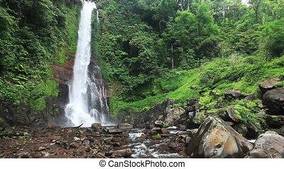 exotique, chute eau, jungles