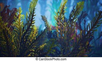 exotique, coloré, marine, coraux, soft-hard, sous-marin