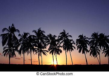 exotique, coucher soleil, palmiers
