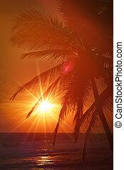 exotique, coucher soleil, scène, paumes