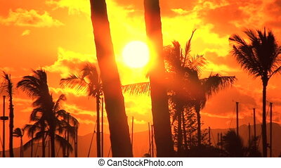 exotique, coucher soleil
