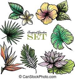 exotique, couleur, feuilles, ensemble