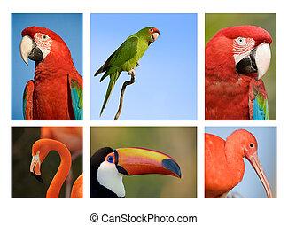 exotique, différent, oiseaux, collection, 1.
