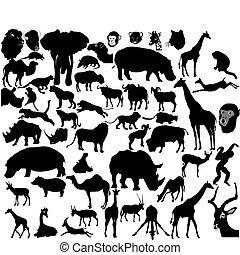 exotique, ensemble, animaux