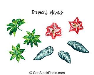 exotique, ensemble, fleurs, feuilles, vecteur, isolé, rouges, illustration., lilly, usines