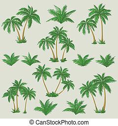 exotique, ensemble, palmiers
