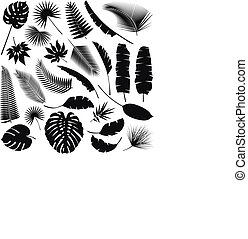 exotique, feuilles, collection, noir