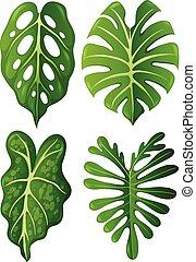 exotique, feuilles, ensemble