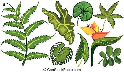 exotique, feuilles, ensemble, fleurs