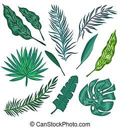 exotique, feuilles, paume, leaves., jungle