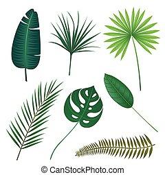 exotique, feuilles, vecteur