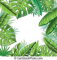 exotique, feuilles